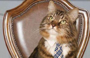 chat-avec-cravate