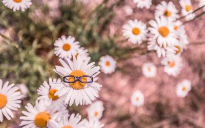 Des marguerites avec une paire de lunettes